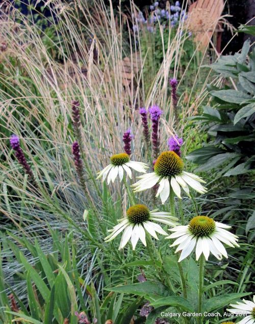 106 best images about beautiful planting in colour schemes for Planting schemes with grasses