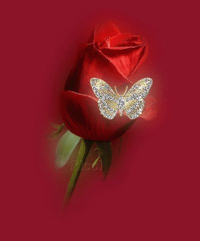 A red rose with a butterfly photo Arosewithbutterfluy.gif