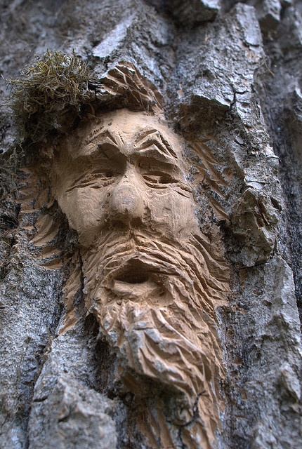 Best images about tree faces on pinterest trees a