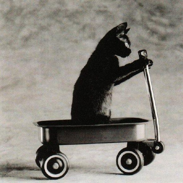 Is your cat ready for the Port Kembla billy-cart derby? http://redpointart.org.au/wp-content/uploads/2013/04/Soap-Box-Diagram-and-Specifications-1.pdf