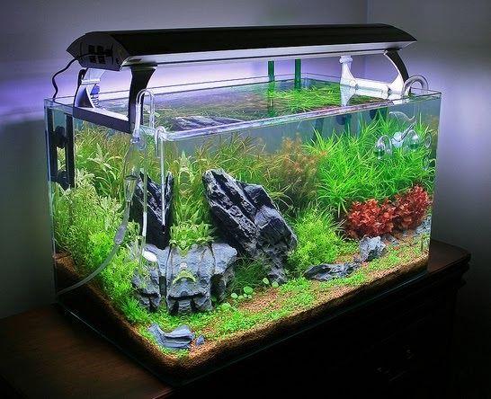 Aquascape Aquarium: Live Plants for Nature Aquariums