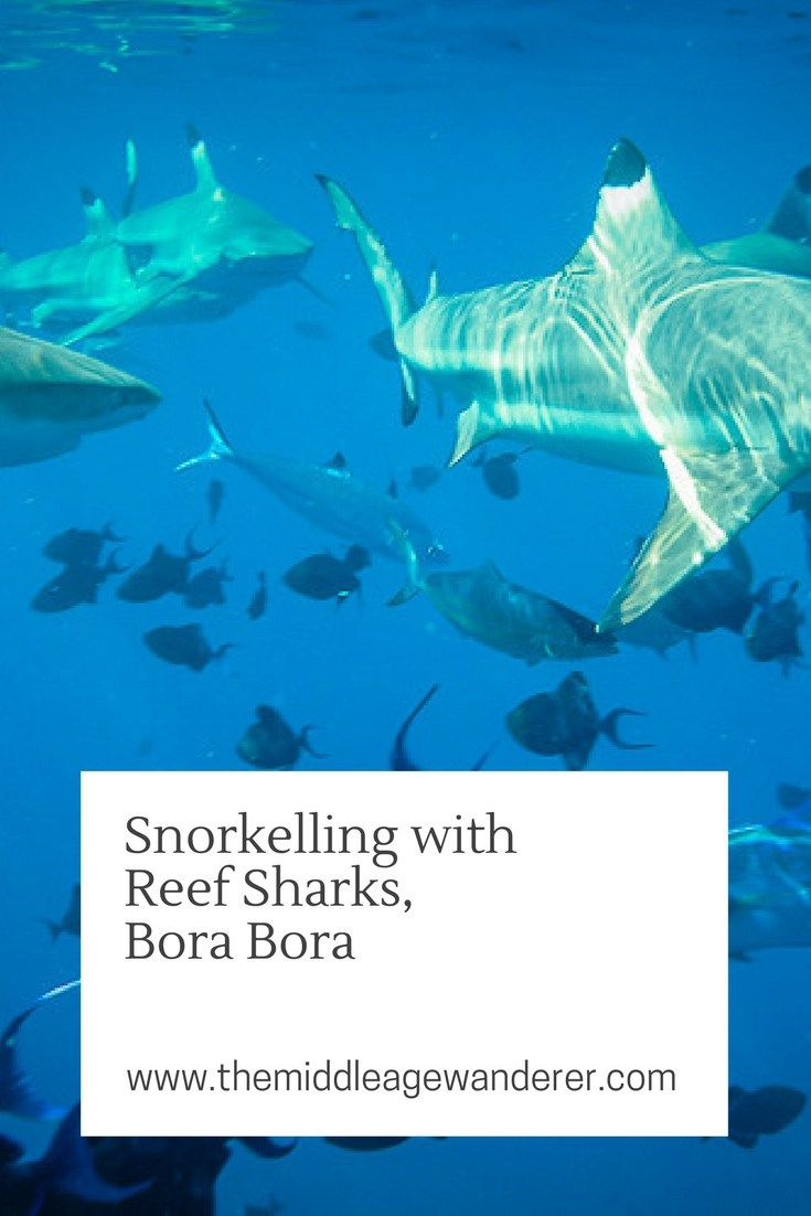 Snorkelling with Sharks, Bora Bora - The Middle Age Wanderer