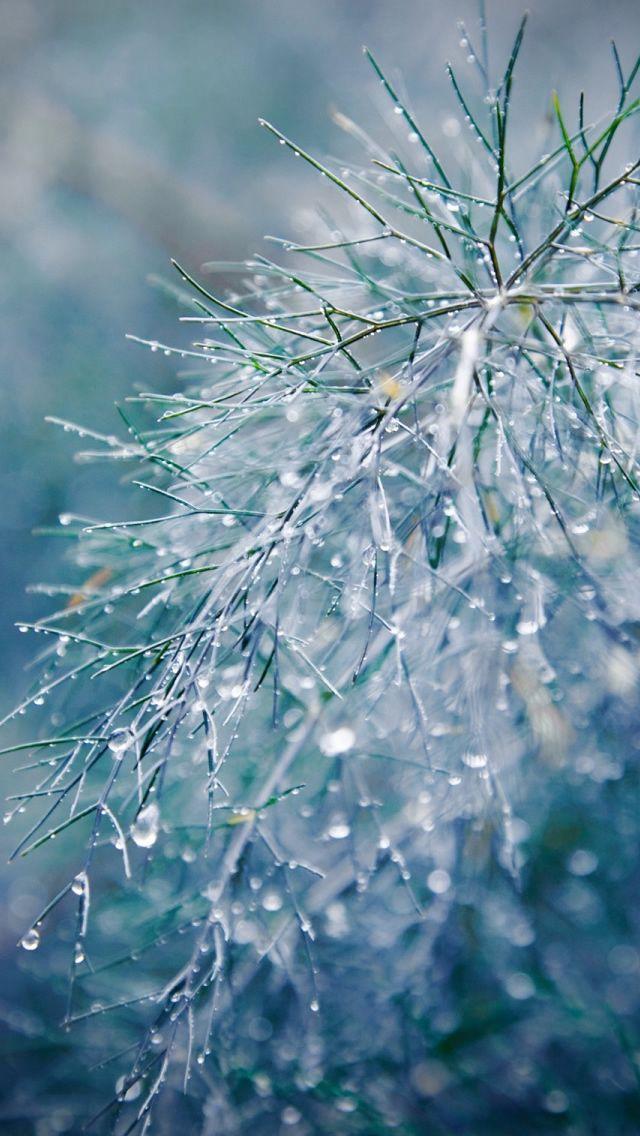 Raindrops Bokeh iPhone 5s Wallpaper Download | iPhone Wallpapers, iPad wallpapers One-stop Download
