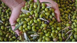 Mangia olive e resti in forma