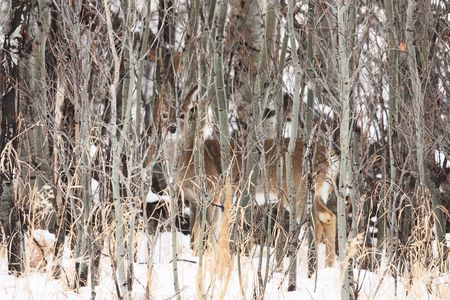 I Spy Photo by Emily bruce — National Geographic Your Shot