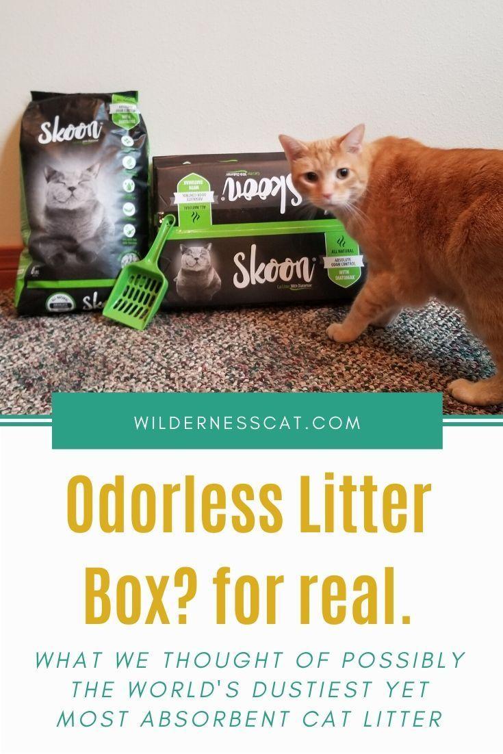 Skoon Cat Litter Review We Tried UltraAbsorbent Cat
