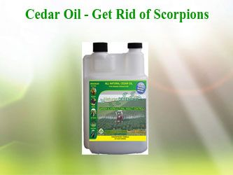 Are there any Natural Scorpion Repellents?  Most people know that lavender are one of the best repellents for scorpions but not too many people know about cedar oil. Does nearly the same thing but costs a little less.   Cedar Oil: Mix 20 or so drops of cedar oil with a mixture of water. Spray the mix on window holes, crack and around doors.