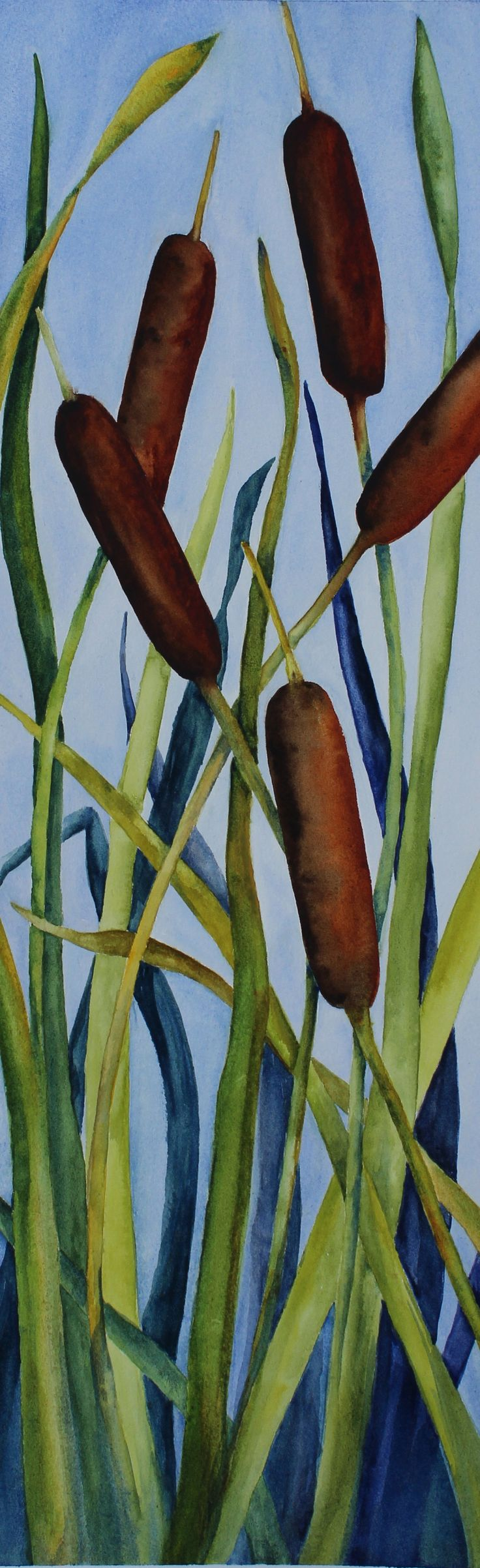 cattails watercolor   Cattails: botanical, contemporary, fine art, measures 27 x 9 inches ...