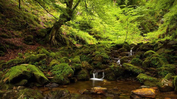 Resultado de imagem para belíssimas imagens de florestas