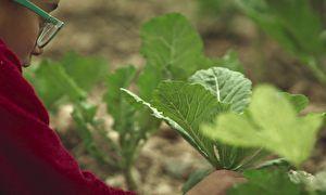 Fonte da juventude: As plantas que você pode comer e não sabia (reportagem Fantástico)