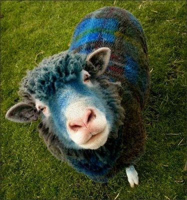 A sheep stands sprayed in tartan style with marking dye at East Links Family Park near Dunbar in Scotland, Friday. The flock of six adults and nine lambs were painted up resembling the traditional cloth in a promotion for Scottish tourism. (AP Photo/ Danny Lawson, PA) (April 10, 2009)  image from http://www.sweetseattlelife.com