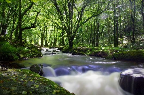 Golitha Falls, Cornwall  www.stnicholasphotography.co.uk