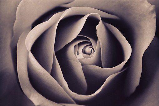 Láska, Umění, Krásné, Bloom