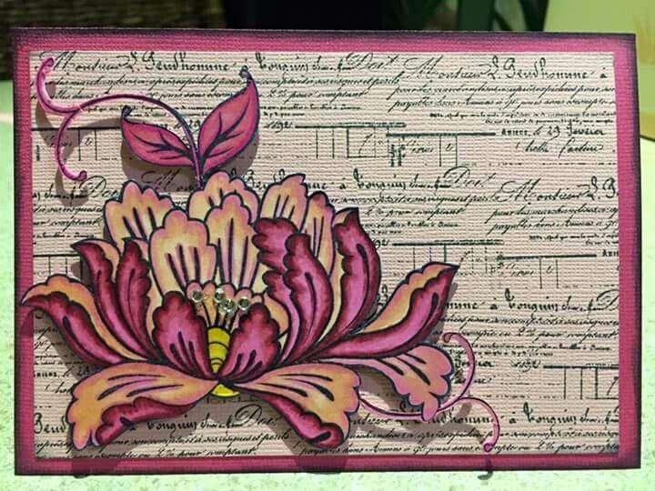 Lotus - kaszazz