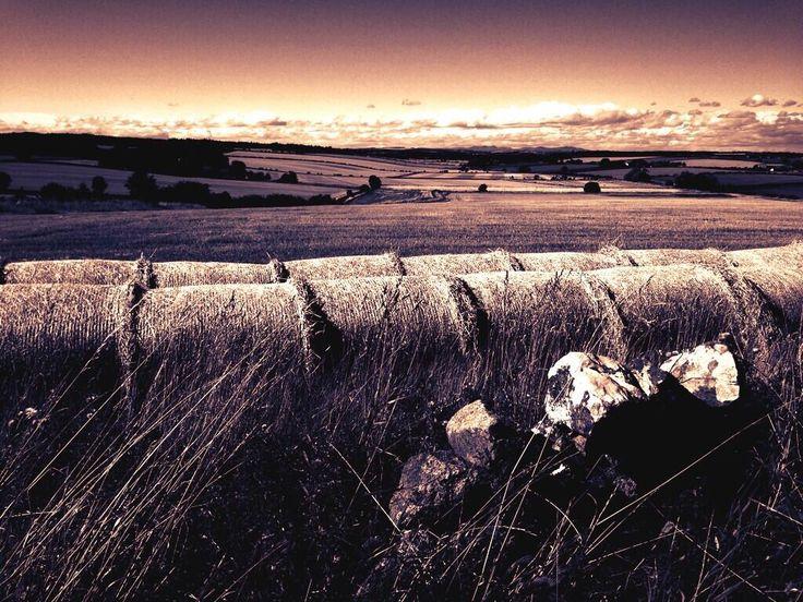 Farmland, East Lothian