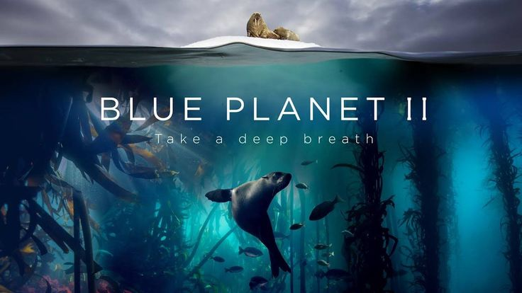 #VR #VRGames #Drone #Gaming Blue Planet II : The Prequel animals, bbc, bbc documentary, bbc earth, BBC Worldwide, blue planet, blue planet 2, blue planet II, funny vr fails, hans zimmer, music collaboration, natural history, nature, ocean, oceans, octopus, Planet Earth, planet earth 2, planet earth II, Prequel, radiohead, sea, shark, sir david attenborough, thom york, vr fails, vr fails rock climbing, vr funny, vr funny clips, vr funny fails, vr funny moments, vr funny video