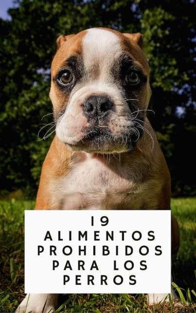 19 alimentos prohibidos para los perros