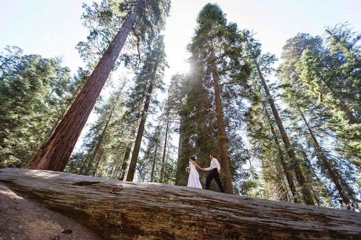 Sequoia Wedding | Mountain Wedding | Bergreen Blog: Outdoor Wedding Destinations in California | Wedding Photography