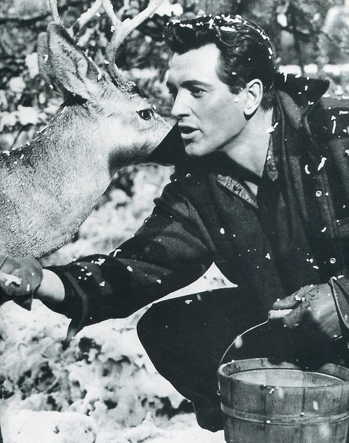 Rock Hudson in All That Heaven Allows (1955)