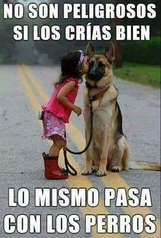 No son peligrosos si los crías bien #love #dog #conciencia