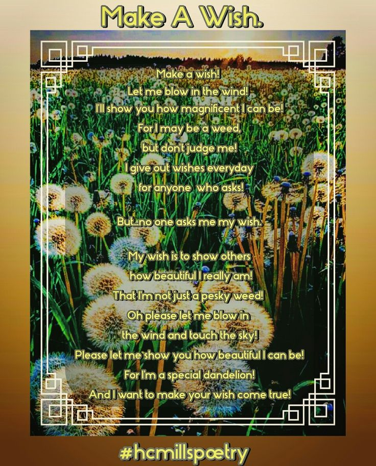 By Hannah Mills. Some see a weed. Some see a wish. #poetry #hcmillspoetry #poem