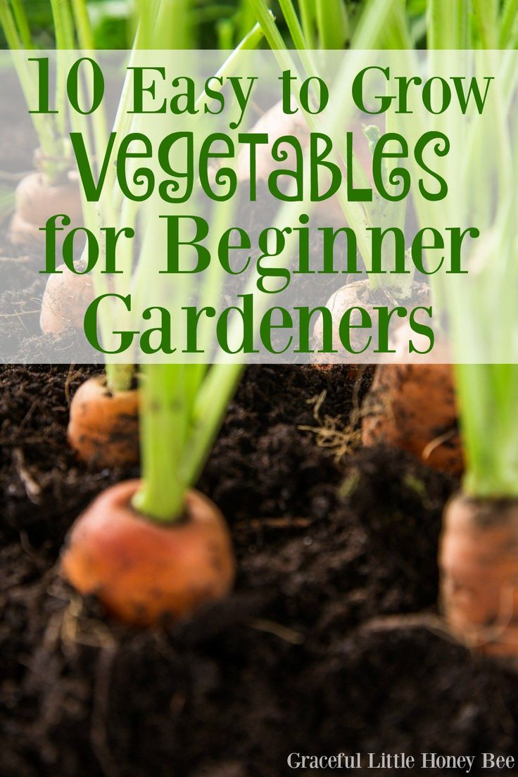 Check out this list of easy to grow vegetables for beginner gardeners. #10 is my favorite!