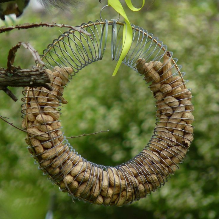 Make this peanut wreath feeder with a Slinky and a few basic supplies. #birds #birdfeeders #gardening