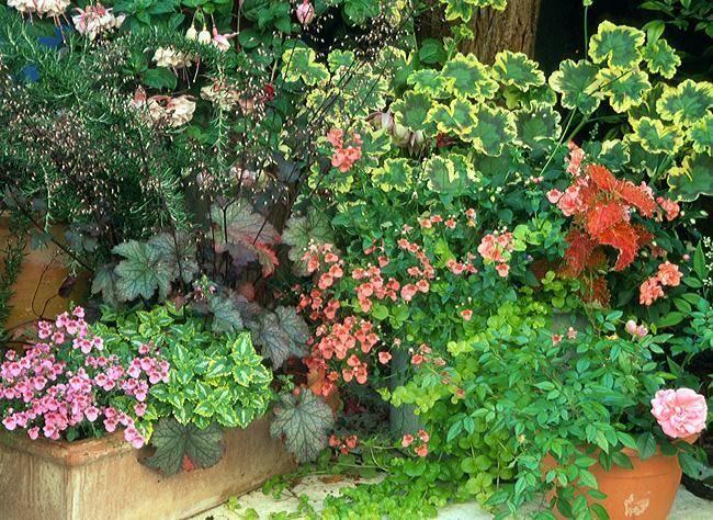 les 25 meilleures id es concernant jardini res d 39 t sur pinterest fleurs en pots jardini res. Black Bedroom Furniture Sets. Home Design Ideas