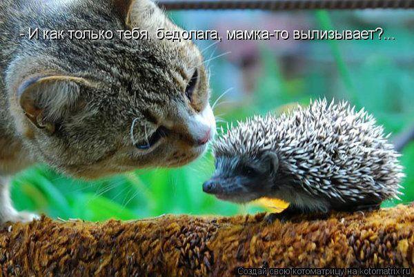 Ёжик и кошка