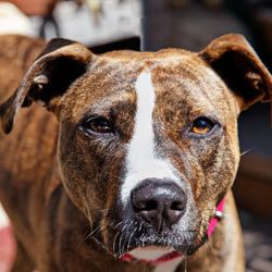Click to sign the petition!  Tell Youtube to remove all videos containing any form of dog fighting.