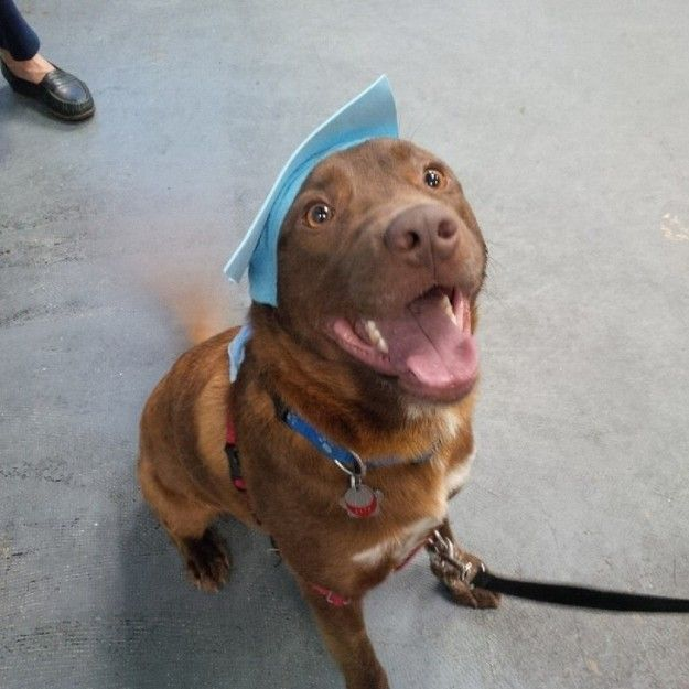 This pup who can't hide it's excitement.   22 Proud Pups Who Finally Graduated…