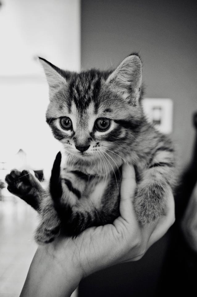 Eugenie Hamel   sweet cat