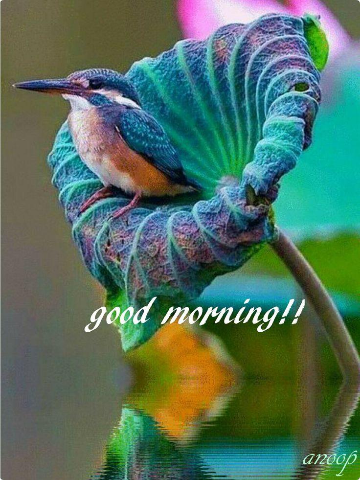 805 besten guten morgen good morning bilder auf pinterest guten morgen connect und gifs. Black Bedroom Furniture Sets. Home Design Ideas