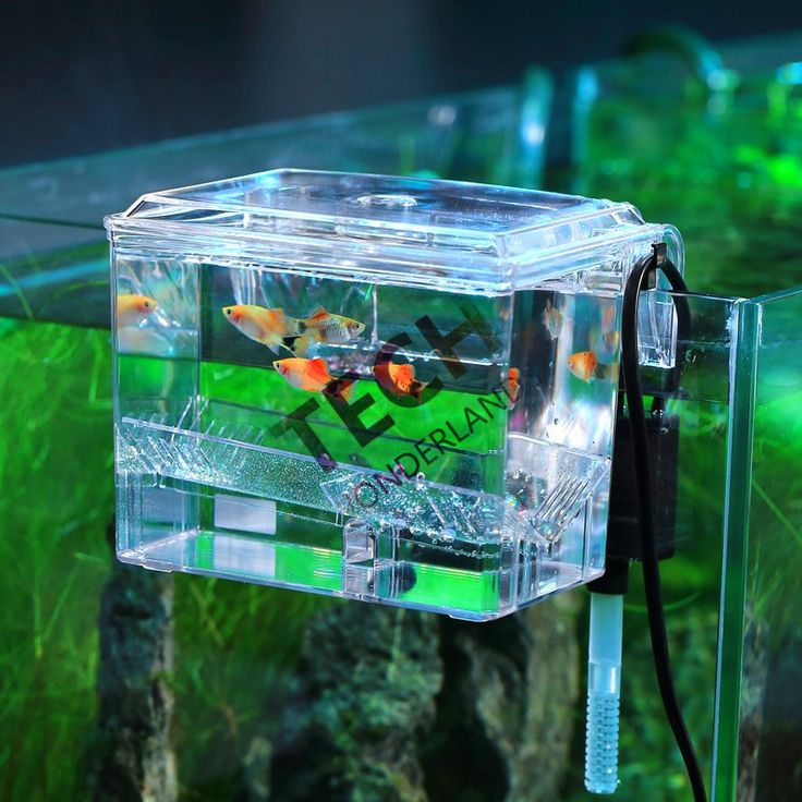 Best 25 isolation tank ideas on pinterest float tank for Fish farm near me