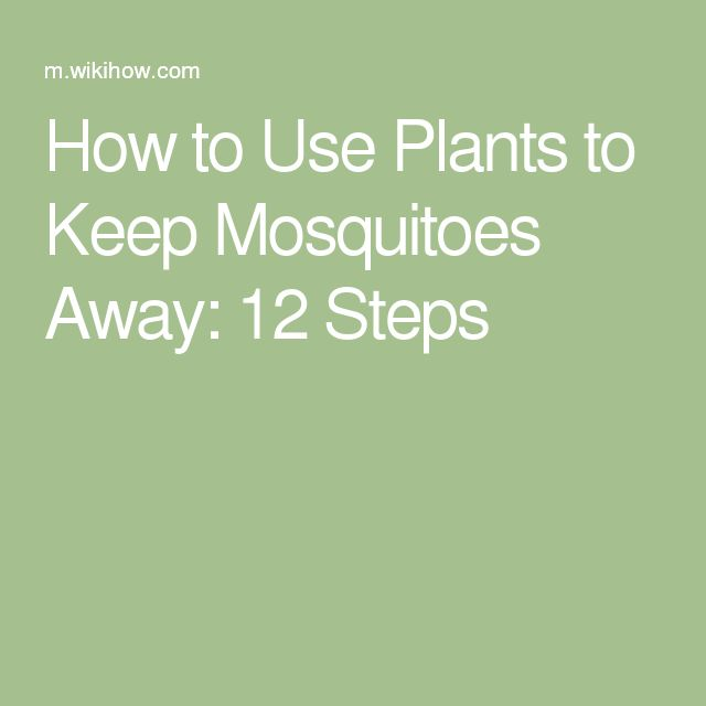 Best 20+ Keep Mosquitoes Away Ideas On Pinterest   Mosquito Spray For Yard,  Diy Mosquito Repellent And Ants In House