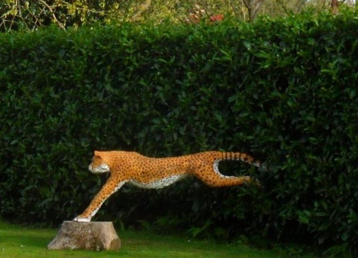 Cheetah  now exhibited at the entrance of  Delamore Arts Cornwood Devon