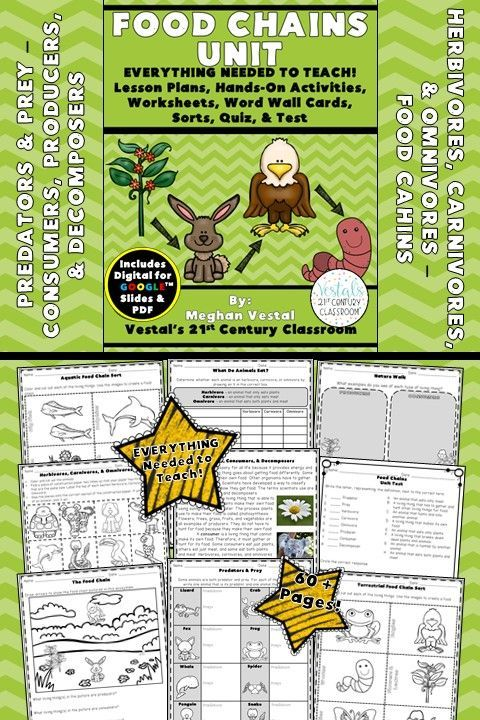 Food Chains {Digital & PDF Included} Hands on activities