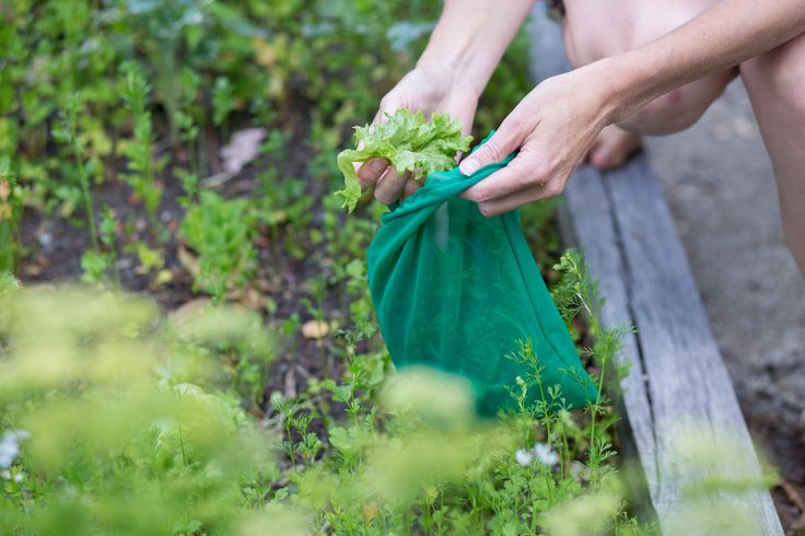 Collecting fresh greens straight from the garden with Goodie Bags The Green Collective