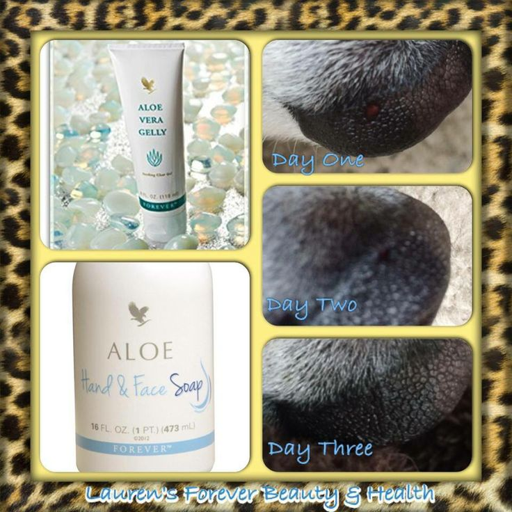 Another brilliant animal testimony! This is Harley (or should I say his nose!). The other day after taking him for a walk I noticed that he had cut on the top of his nose. So to prevent infection I cleaned his nose with Forever Aloe Hand & Face Soap and then applied Forever Aloe Vera Gelly. I continued to apply this the following day also. Today is the third day and as you can see from the photo it has completed healed up! Like Magic. More information from www.karen-steve.myflpbiz.com