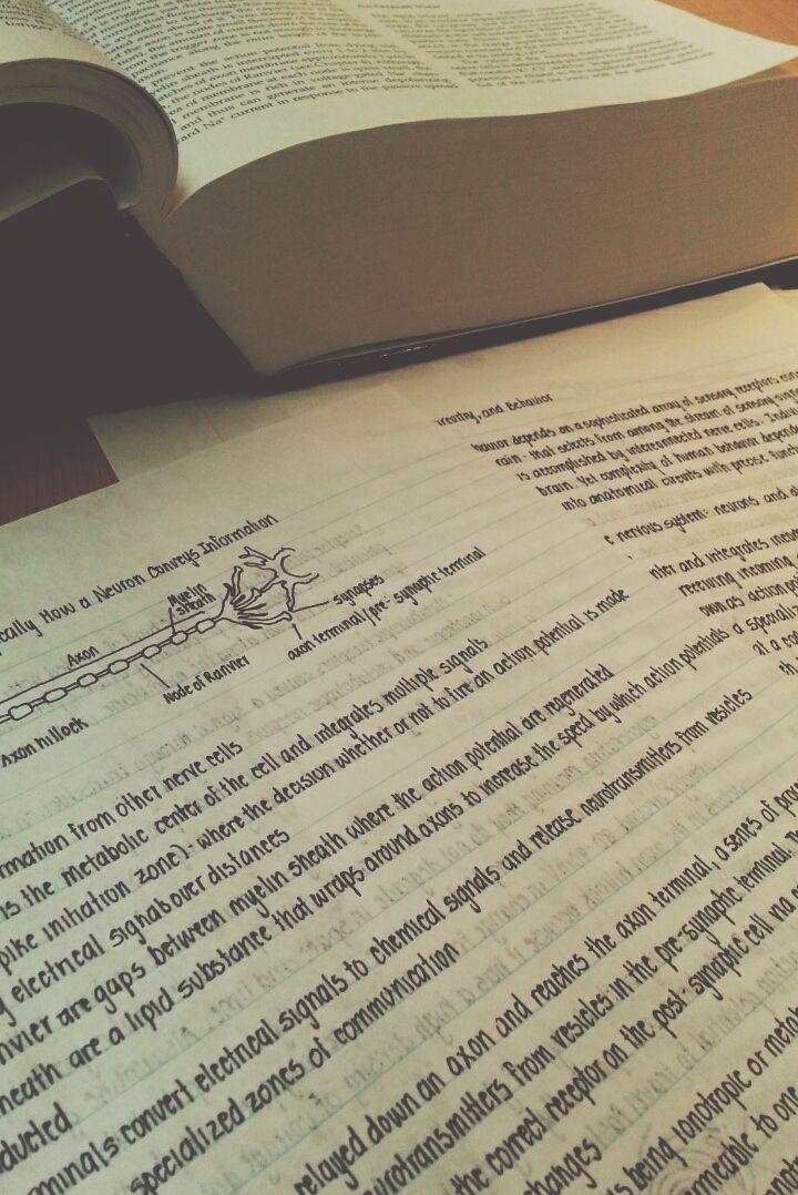studysoulmate:The brain studies ITSELF…wow.   Beautiful handwriting