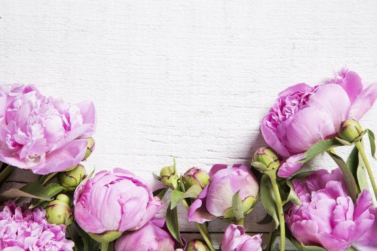 на белом фоне розовые пионы акварель: 16 тыс изображений найдено в Яндекс.Картинках