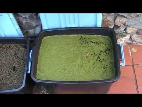 17 best images about basil farms aquaponics hydroponics on for Aquaponics fish food