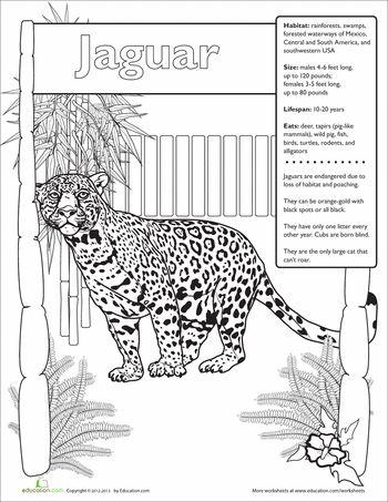 Jaguar Facts Jaguar Facts For Kids Rainforest Project