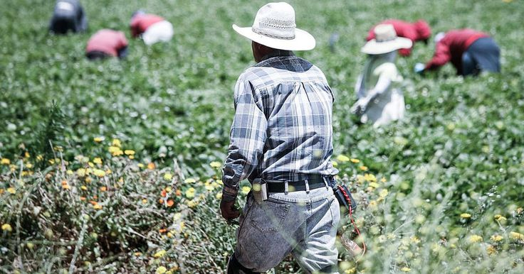 In California, the threat of immigration deportation looms for farmworkers. See why this is an important issue for U.S. agriculture.…