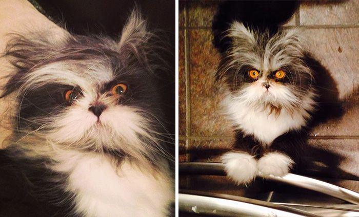 Atchoum: The Cat Whose Death Stare Will Devour Your Soul