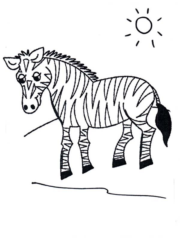 Zebra Zebra In Grasslands Coloring Page Zebra Coloring Pages Animal Coloring Pages Coloring Pages