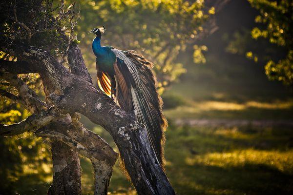 Sri Lanka by Andre Olivier Lyra, via Behance