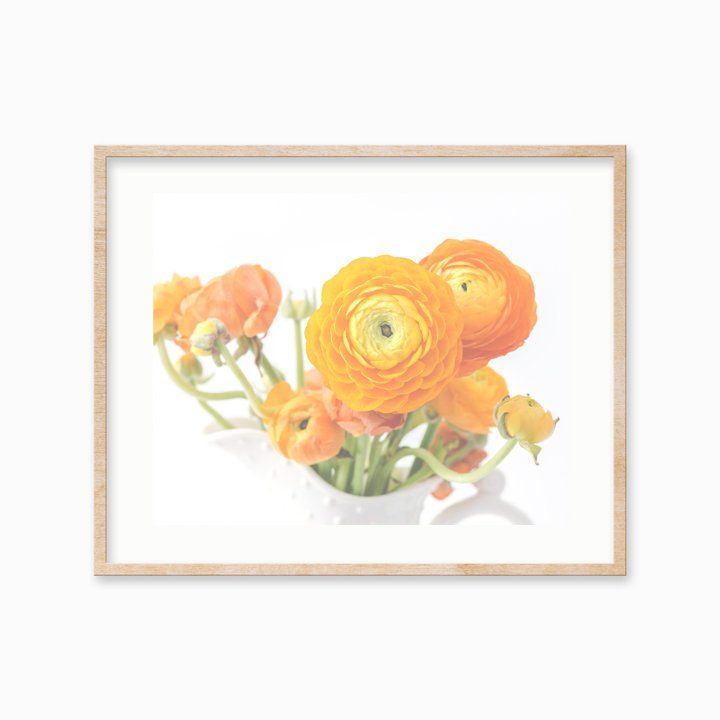 Yellow Ranunculus Flower Photo Prints Modern Ranunculus Wall Prints Cottage Shabby Chic Floral Decor Yellow Flower Photos Photo Greeting Cards Flower Photos
