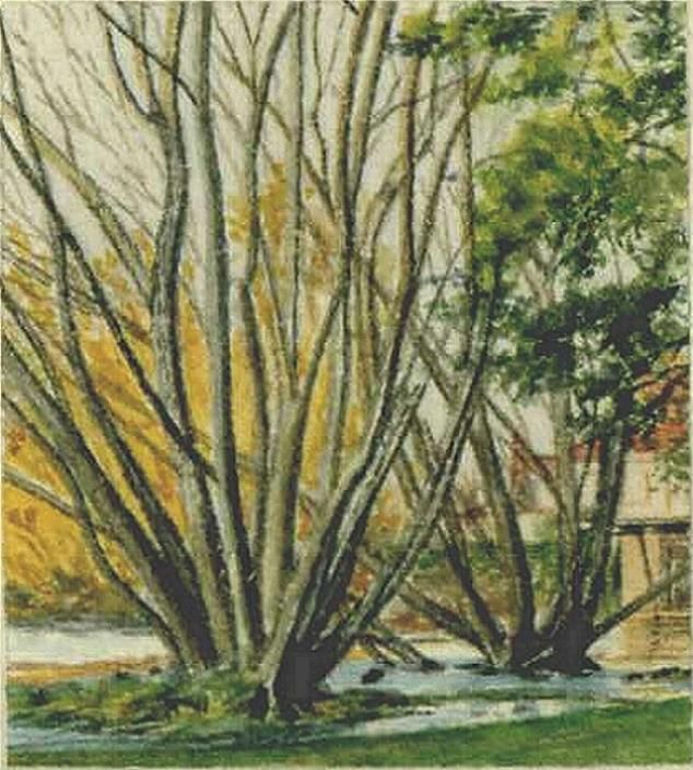 Deloraine. Trees. My favourite subject.