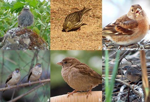 """Quiz photos : """"quelques oiseaux pouvant être vus en hiver dans les jardins en…"""